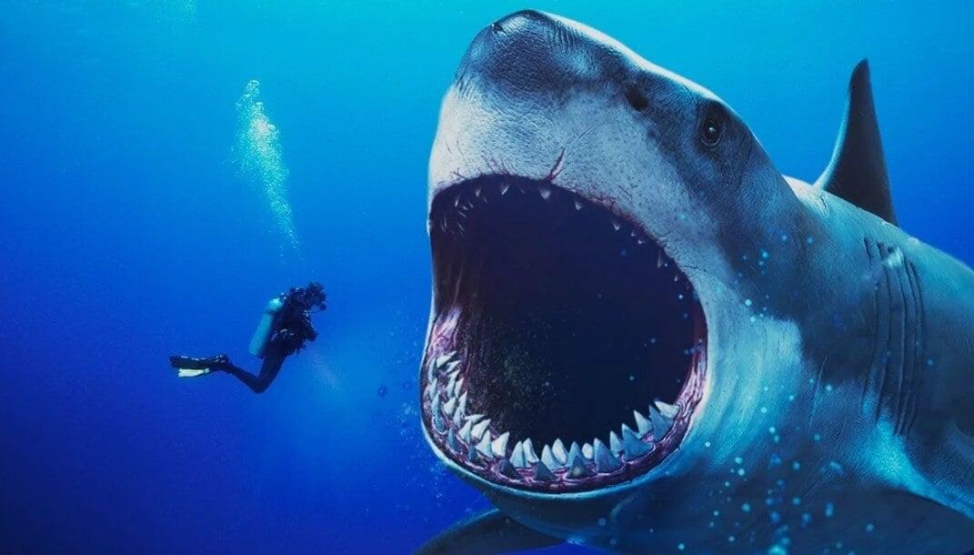 Каких животных боятся опасные акулы?