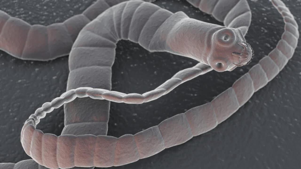 Из-за чего в мозгах появляются черви и как это лечится?