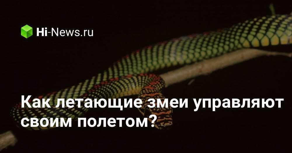Как летающие змеи управляют своим полетом?