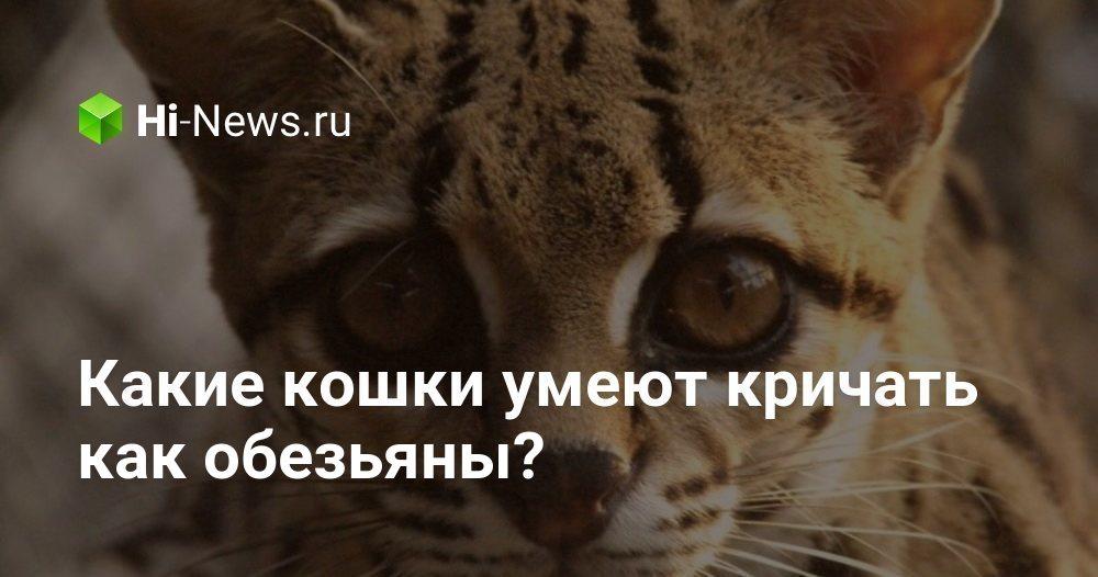 Какие кошки умеют кричать как обезьяны?