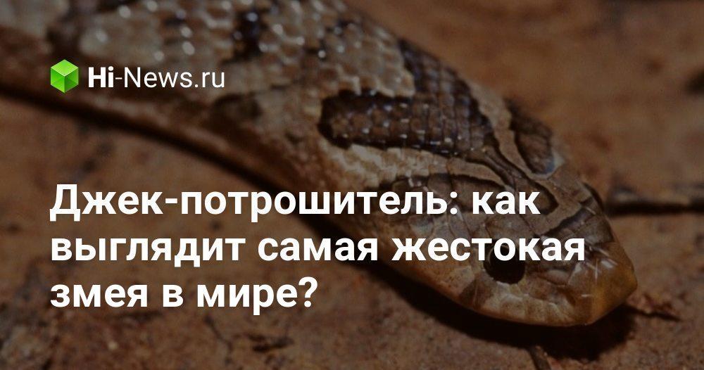 Джек-потрошитель: как выглядит самая жестокая змея в мире?