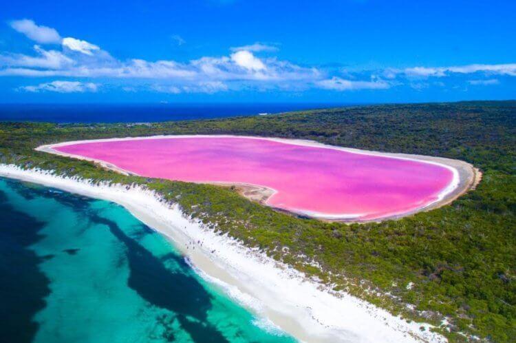 Почему озеро Хиллиер окрашено в розовый цвет?