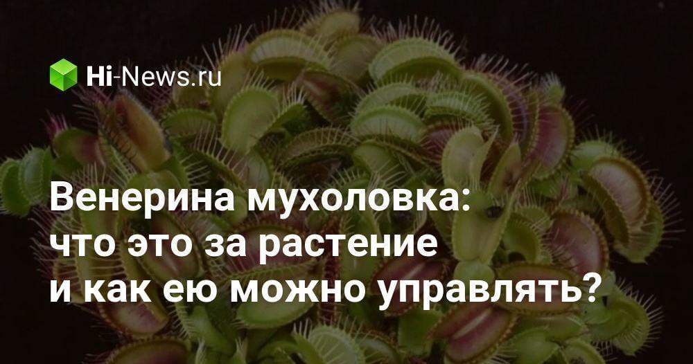 Венерина мухоловка: что это за растение и как ею можно управлять?