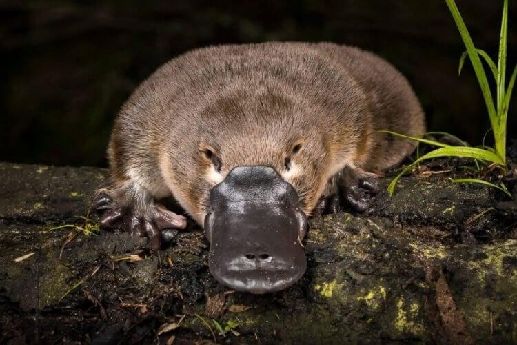 Как выглядят самые странные животные в мире и почему они стали такими?