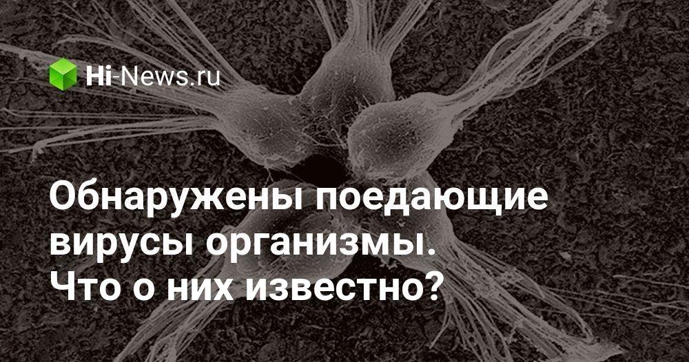 Обнаружены поедающие вирусы организмы. Что о них известно?
