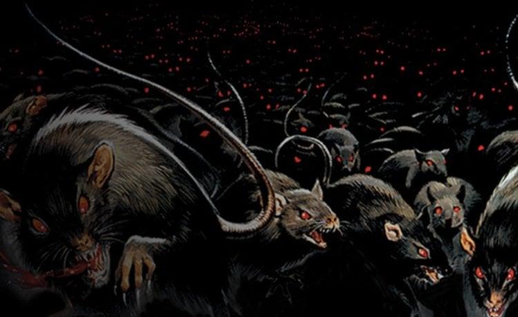 Зачем в Австралии уничтожили 350 000 крыс и мышей?