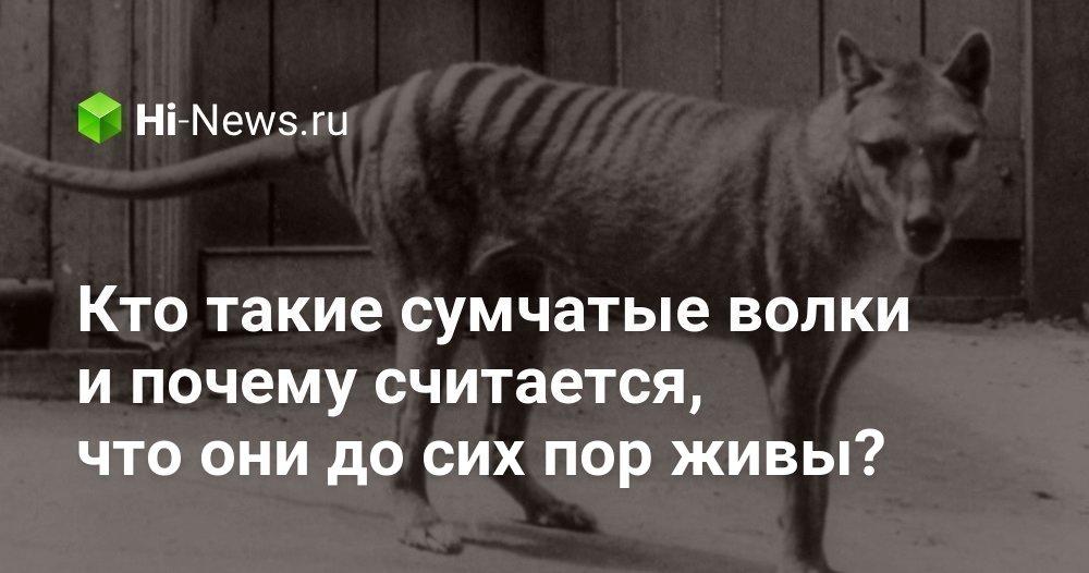 Кто такие сумчатые волки и почему считается, что они до сих пор живы?