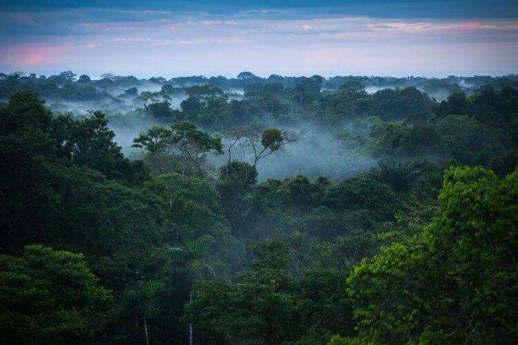 Что происходит с тропическими лесами Амазонии?