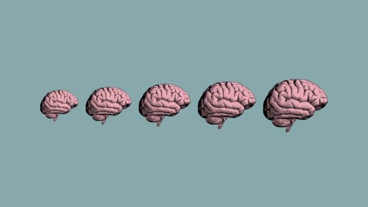 Ученые обнаружили в мозге «зомби-гены», которые активны после смерти
