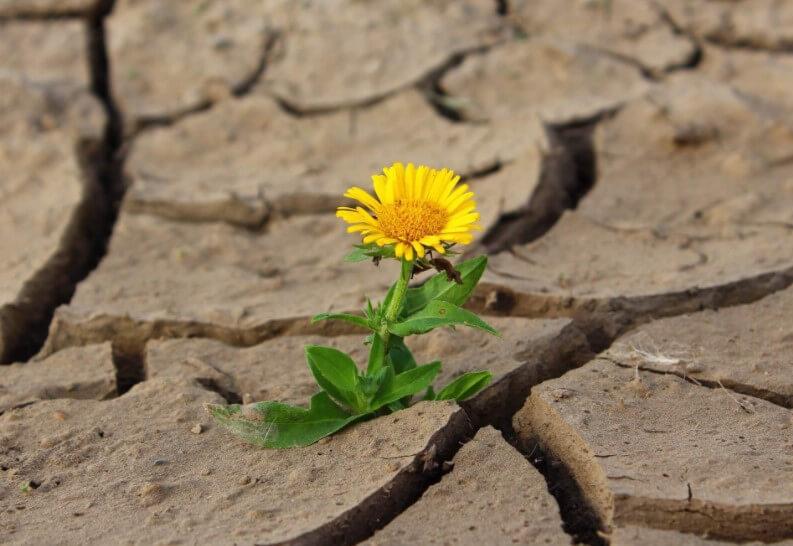 Как растения выживают во время засухи