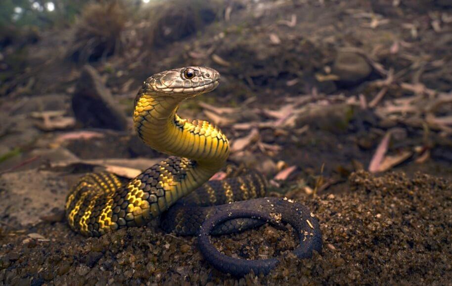 Люди могли быть такими же ядовитыми, как змеи. Но почему этого не произошло