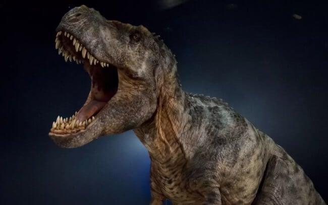 Динозавры - какими они были, как вымерли динозавры, размер динозавров,  известные динозавры