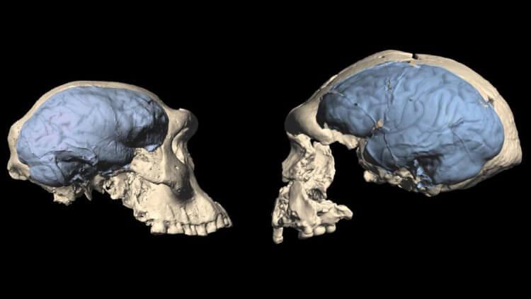 Насколько умными были древние люди?