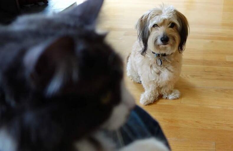 Как ученые доказали, что собаки умеют ревновать