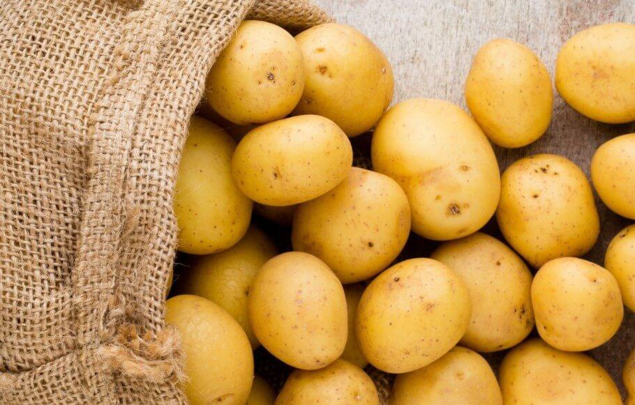 Для чего ученые разработали светящуюся картошку
