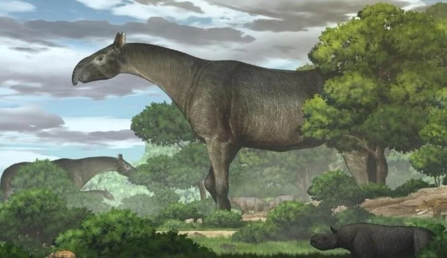 Какими были индрикотерии  одни из самых крупных млекопитающих в истории Земли