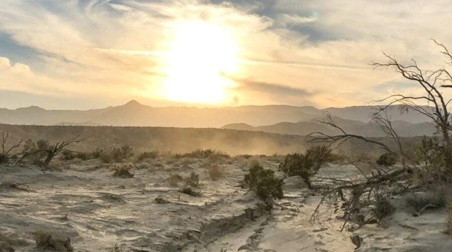 В пустынях Калифорнии исчезают растения, и это невозможно остановить