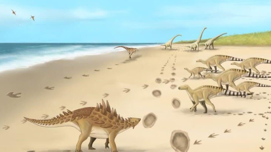 Ученые нашли окаменелые следы крупных динозавров. Почему это интересно