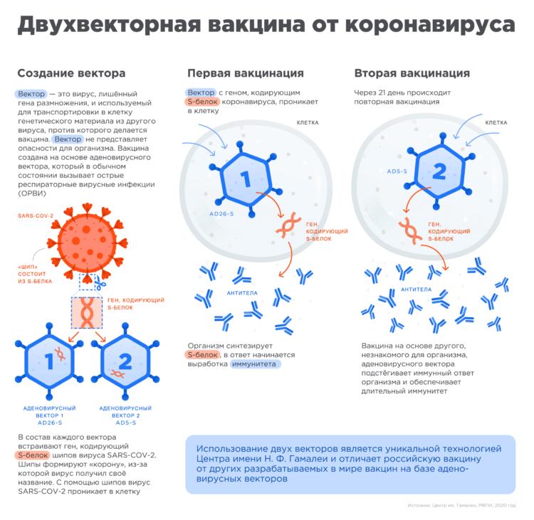 Как работает векторная вакцина против COVID-19. Изображение: Центр им. Гамалеи