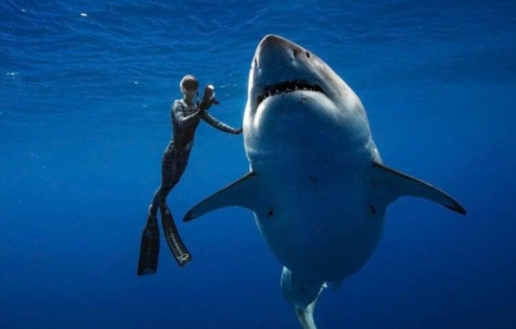 Акулы не нападают на людей, а просто «изучают» своими острыми зубами