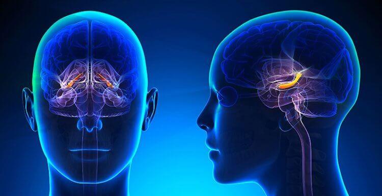 Как наша память влияет на углеводный обмен веществ