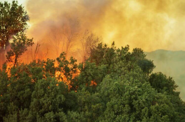 Дым от лесных пожаров повышает смертность от Covid-19