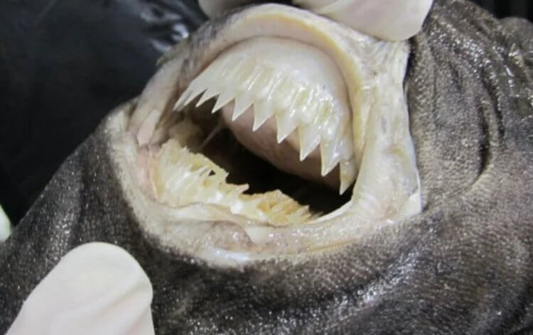 Самые страшные акулы в мире: чем они питаются?