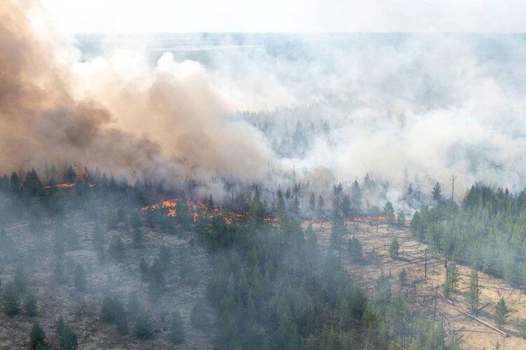 Какие климатические последствия повлекут за собой пожары в Сибири?