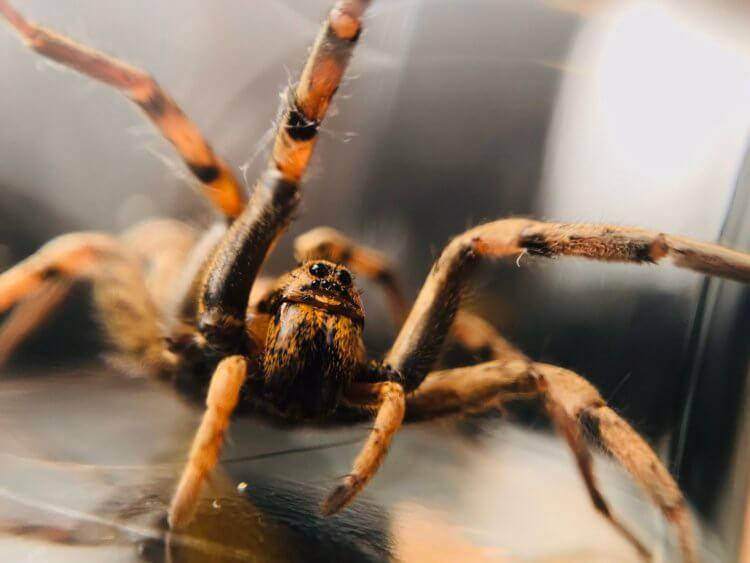 Каких ядовитых пауков и змей можно встретить в Подмосковье