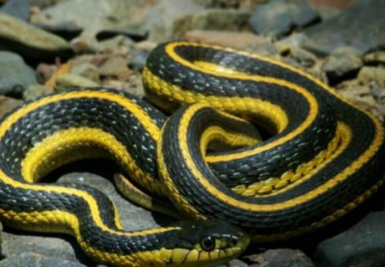 Самые красивые змеи в мире поселились в аэропорту Сан-Франциско