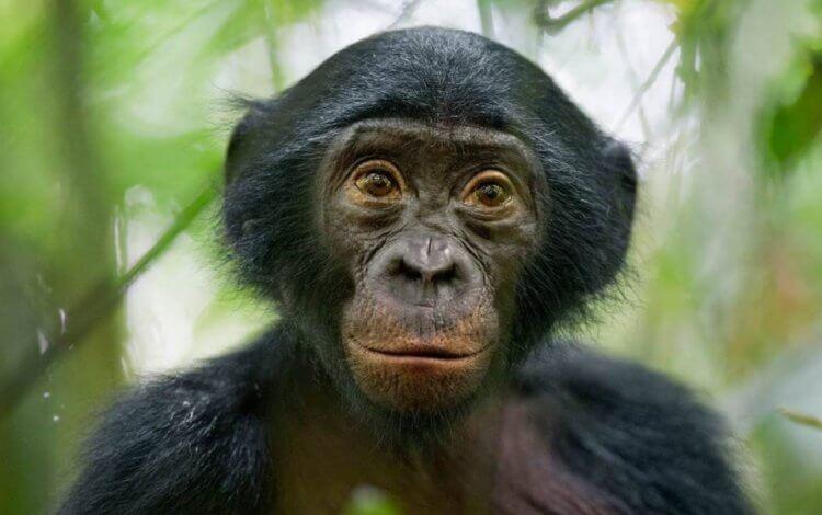 Правила этикета у обезьян: как они здороваются и прощаются?