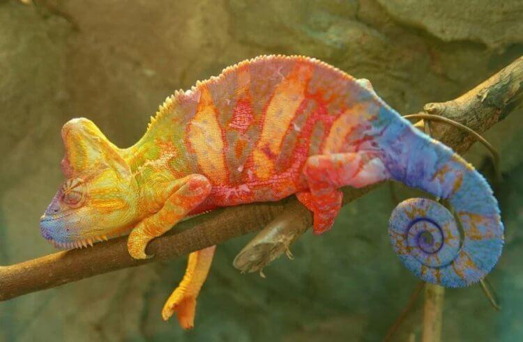 Как устроен робот, меняющий цвет будто хамелеон?