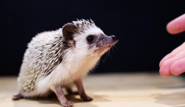 Почему городские животные становятся все больше в размерах?