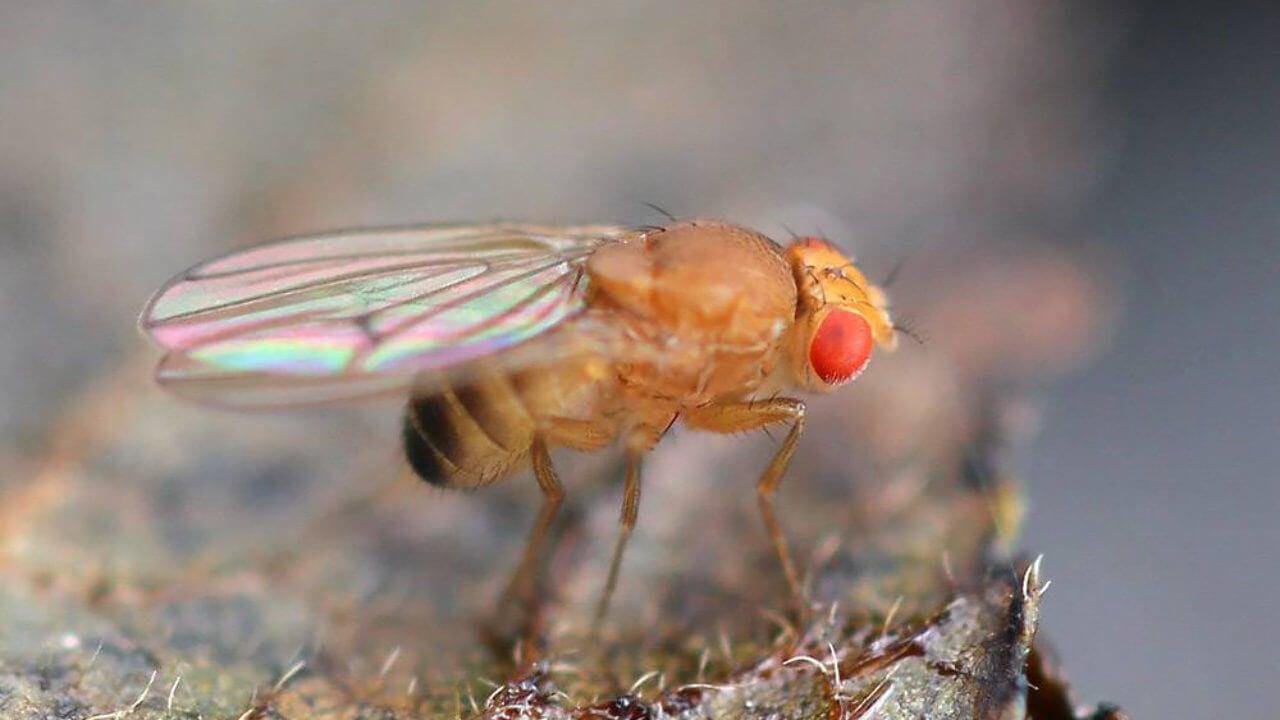 Одиночество вызывает у мух сильный стресс — они недосыпают и начинают переедать