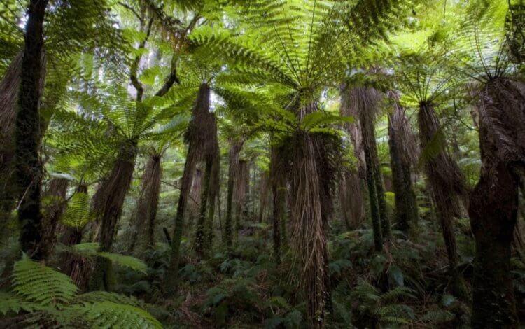Почему насекомые Новой Зеландии начали быстро эволюционировать?