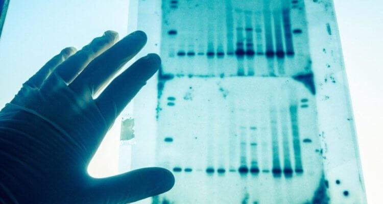 Следы ДНК на месте преступления могут ввести в заблуждение