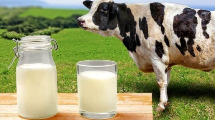 Освоение молочной диеты позволило древним людям мигрировать на дальние расстояния