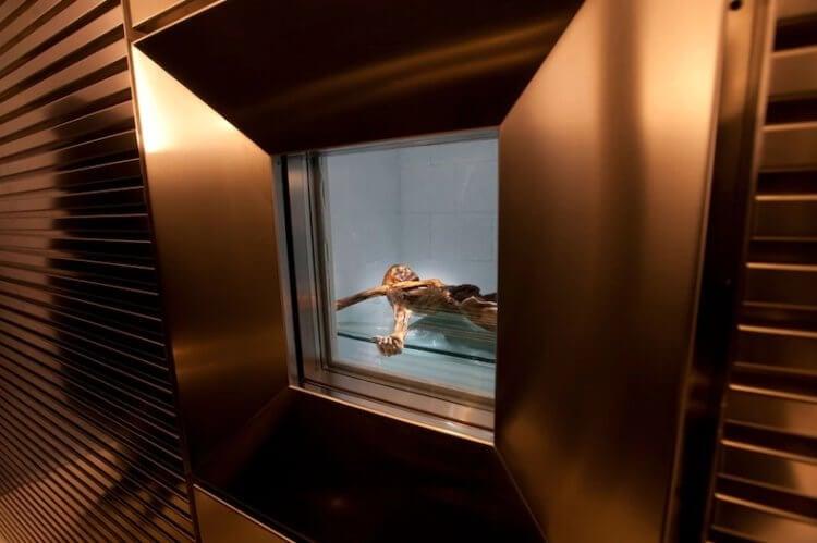 Ледяная мумия Эци: что стало известно спустя 30 лет с момента ее находки