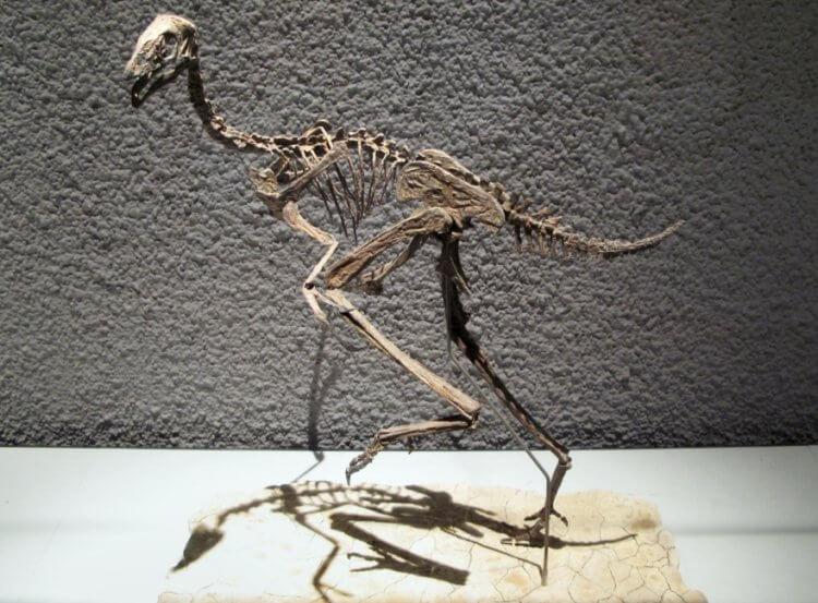 В останках «китайского» динозавра могло сохраниться ДНК