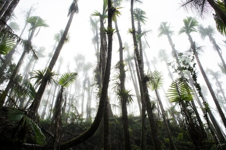 Тропические леса адаптированы к ураганам, но изменение климата может их уничтожить