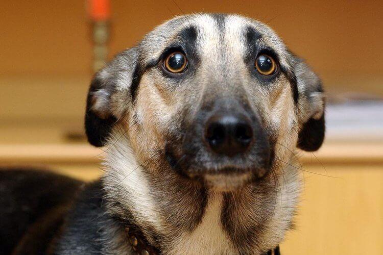 Собаки способны различать случайные и специальные действия человека