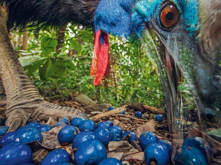 Ученые выяснили, какая птица была первой одомашнена