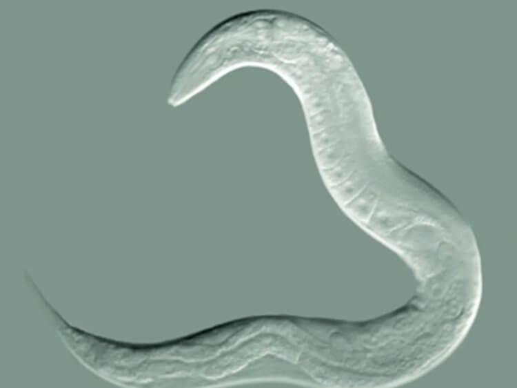 Генетическая мутация может продлить жизнь на 23%