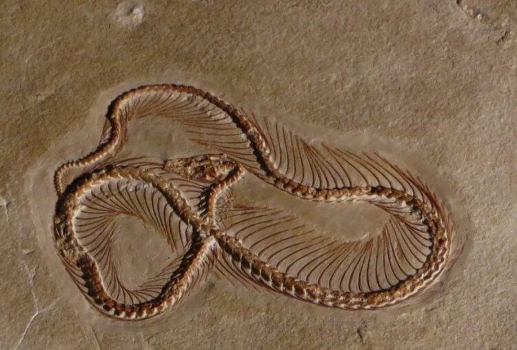 Почему на Земле так много змей?