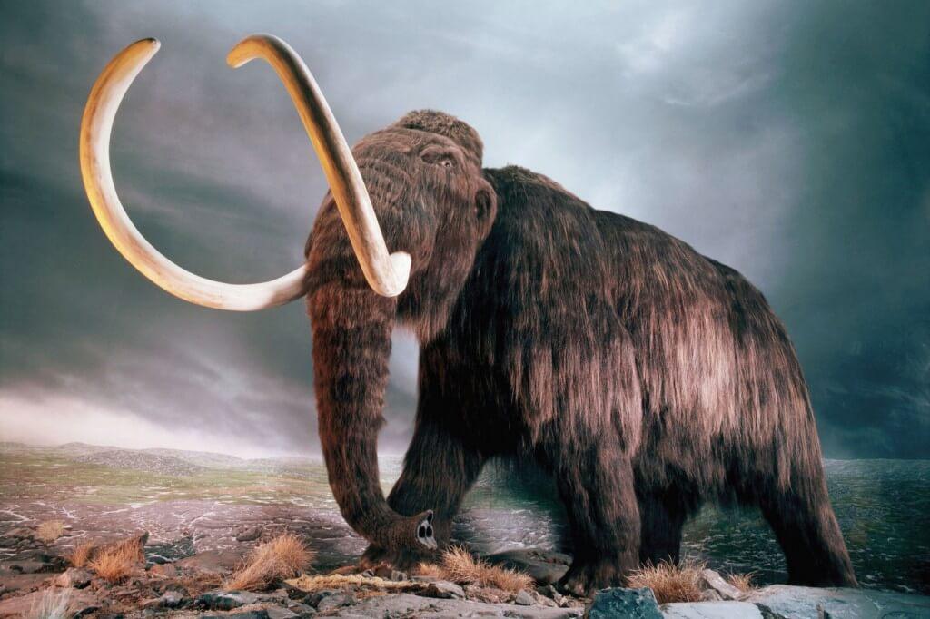 Ученые хотят оживить мамонтов, чтобы остановить глобальное потепление климата
