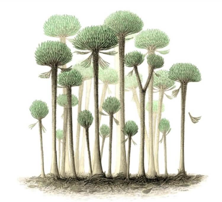 Самый древний лес в мире: какие деревья в нем произрастали?
