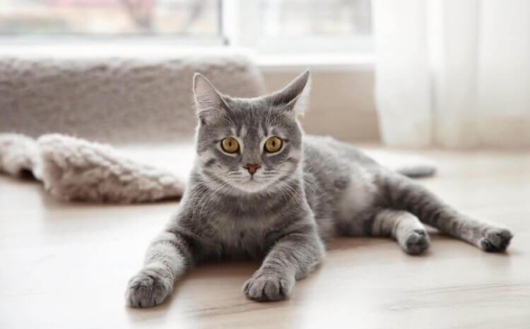 В США домашние кошки заразили женщину легочной чумой