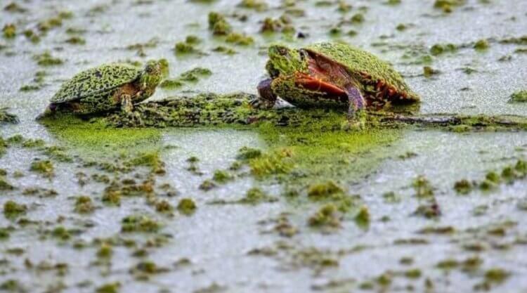 Массовое вымирание животных может превратить воду в «ядовитый суп»