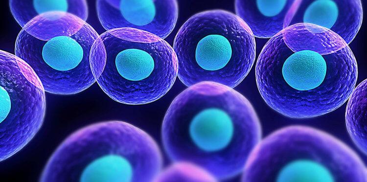 Ученые научили искусственные клетки всасывать питательные вещества