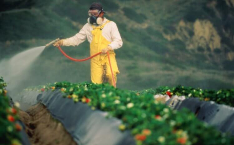 Как фермеры борются с вредителями и какой способ самый лучший?